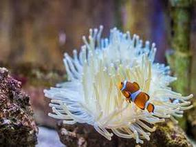 Anémone marinede l'aquarium de Touraine proche manoir de la Voûte